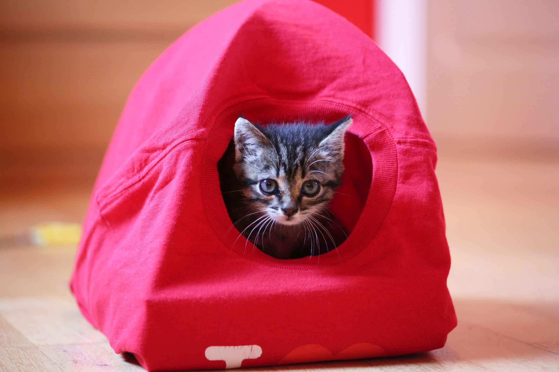 Une tente pour son petit chat ou chaton