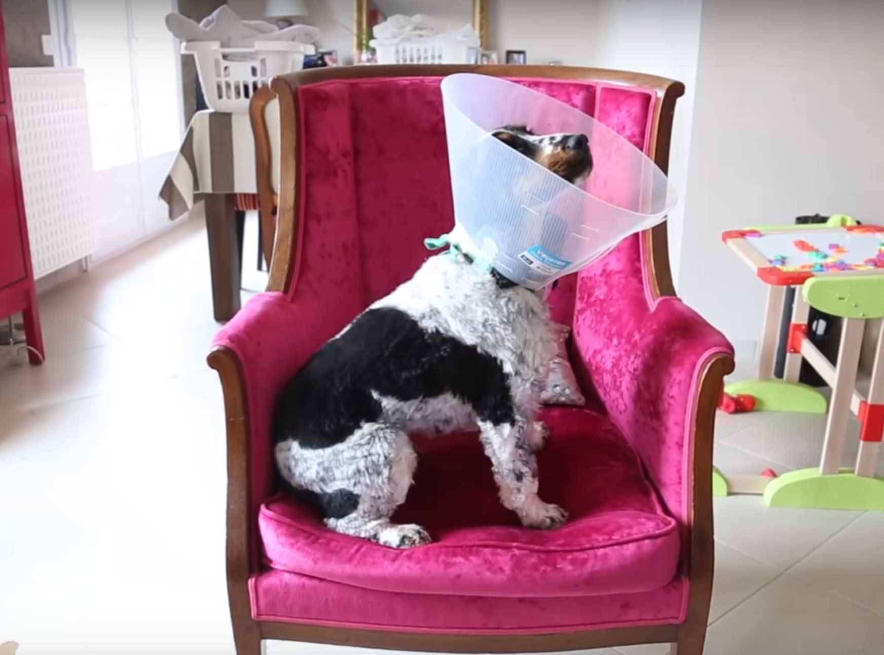 tutoriel bricolage fabriquer une lampe chien